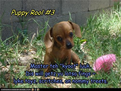 """Puppy Rool #3 Master teh """"kyoot"""" luuk. Dis will getz yu lotsa fings ~ lyke toyz, scritches, an nommy treets."""
