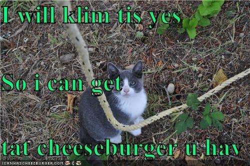 Cheezburger Image 4503974144