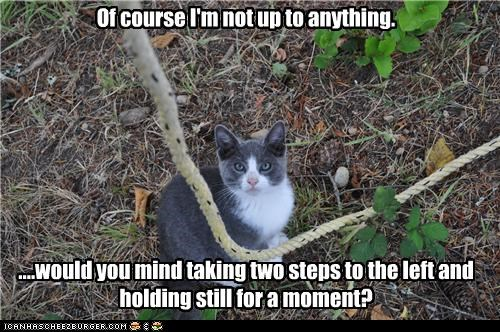 anything,caption,captioned,cat,ignorance,lying,not,of course,playing dumb,rope,suspicious,trap,up to