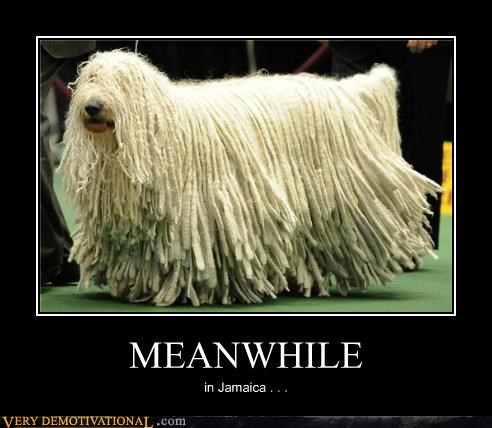 awesome dogs dreads jamaica Meanwhile
