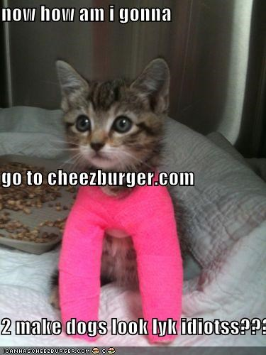 Cheezburger Image 4504490752