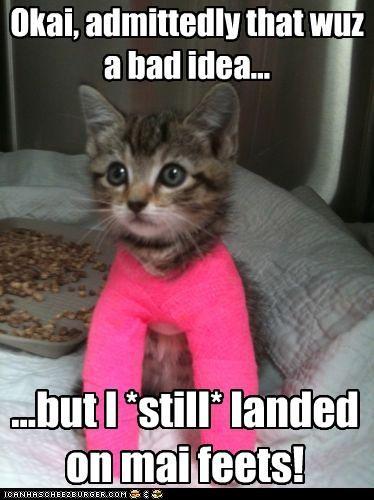 admitting bad bad idea borked but caption captioned cast cat feet idea injury kitten landed landing proof - 4504756480
