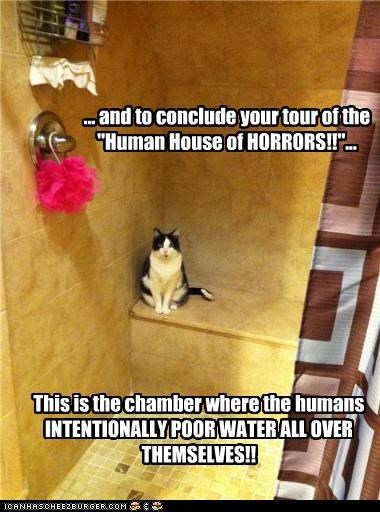 caption captioned cat chamber conclude conclusion horrors house human scary shower Terrifying tour - 4505063424