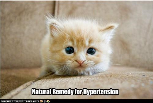 caption captioned cat eyes Hall of Fame hypertension kitten natural remedy Staring tabby - 4505565440