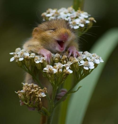 Anthropomorphized Animal,Eff Yeah Flowers,Illustrated Happiness