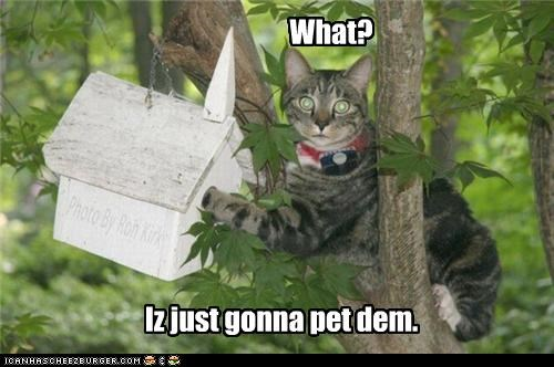 birdhouse,birds,caption,captioned,cat,caught,crime,excuse,explanation,Hall of Fame,intention,pet,question,what