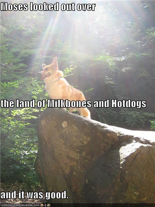 awesome,corgi,country,food,hotdogs,inspirational,it was good,land,leader,milkbones,moses,noms,rock