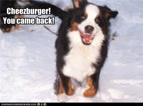 Cheezburger Image 4505803264