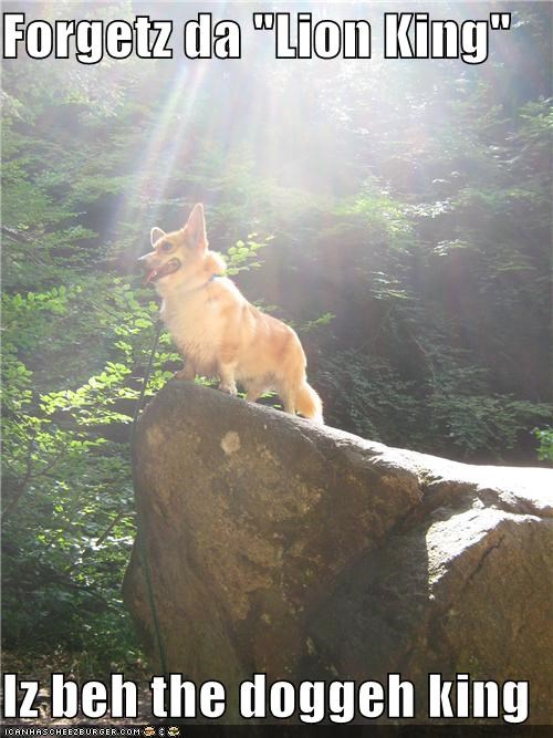 best of the week,corgi,dramatic,forget,Hall of Fame,i has a hotdog,king,lion king,Movie,posing,rock,standing