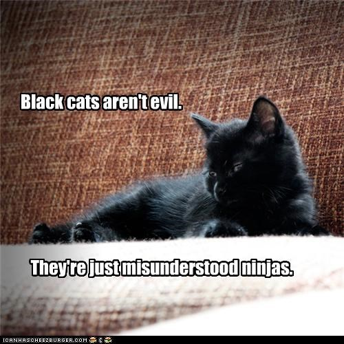 basement cat caption captioned cat evil Hall of Fame kitten misunderstood ninja ninjas rule truth - 4505956864