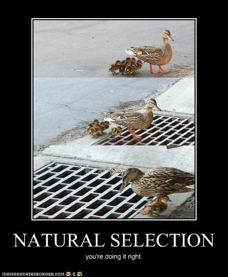 NATURAL SELECTION you're doing it right.