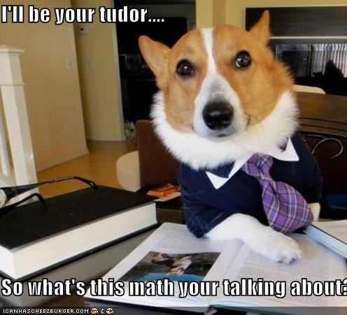 best of the week,corgi,Hall of Fame,help,learning,math,math homework,smart,teacher,teaching,tutor
