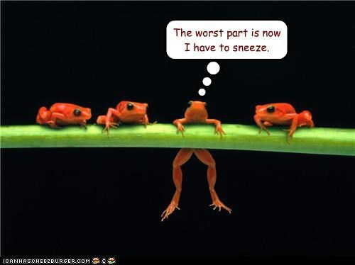 afraid,caption,captioned,dangling,do not want,frog,frogs,have to,need,now,part,problem,sneeze,worst