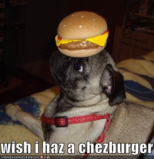 Cheezburger Image 4507135744