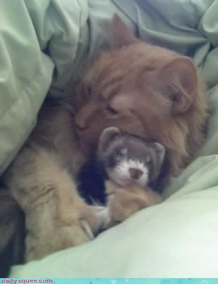 cat,ferret,hate,love,reader squees,relationship,sleeping,snuggling