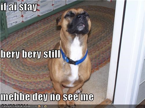 Cheezburger Image 4508240640