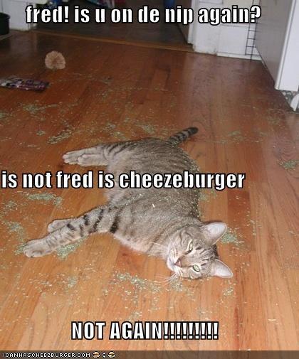 Cheezburger Image 4508245248