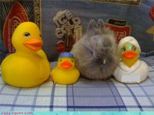 baby,bunny,cute,duck,ducks,rabbit,reader squees,rubber duck,tiny,toys,ugly duckling