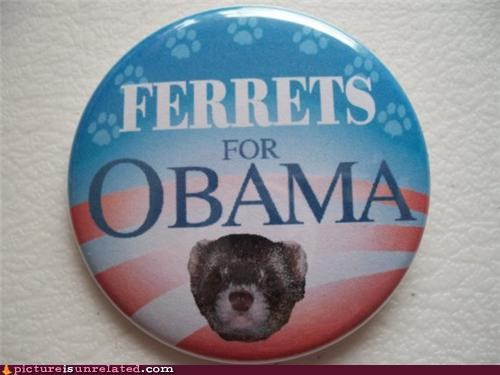 animals ferrets obama politics rodents wtf - 4508745216