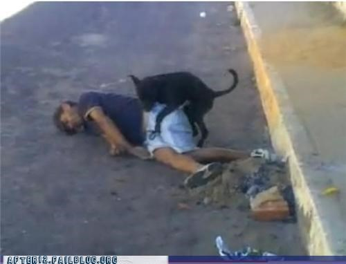 asleep dogs drunk humping outdoors passed out streets - 4508750336