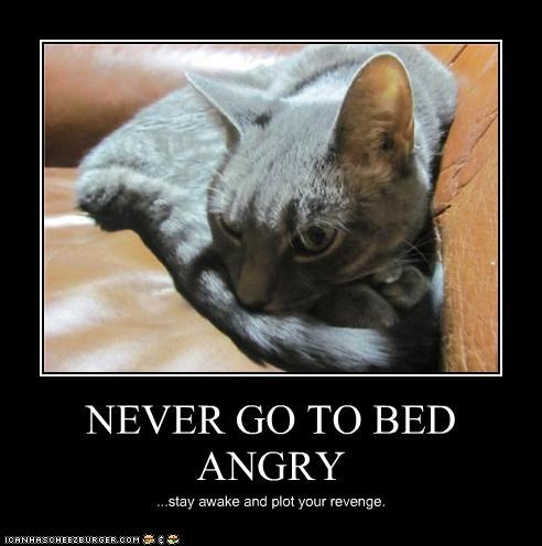 adage advice angry bed best of the week caption captioned cat go Hall of Fame never plot revenge stay awake - 4508840960