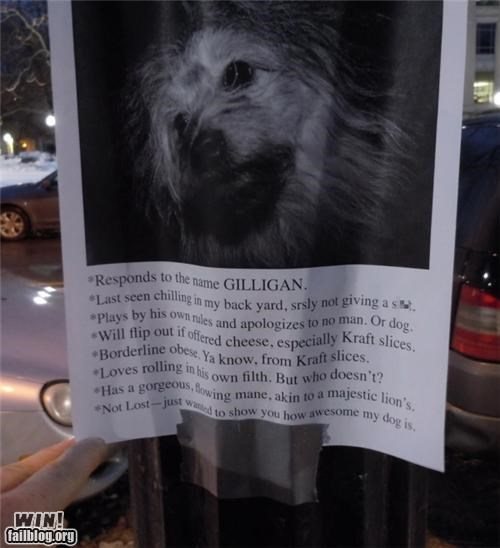 animals,clever,dogs,lost,signs