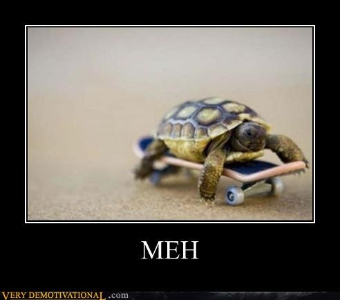 animal,awesome,dont-care,skateboard,turtle