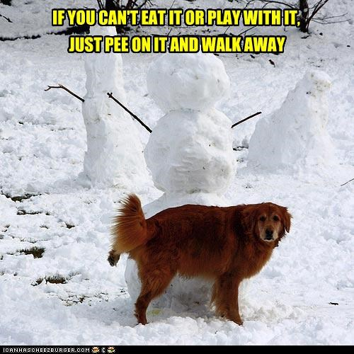 cant eat golden retriever guideline instructions lesson pee play rule walk away - 4509425408