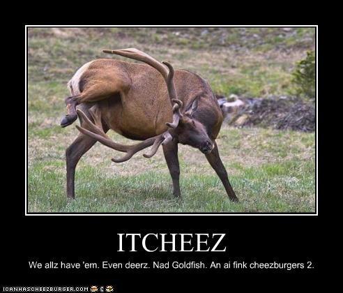 Cheezburger Image 4509996544