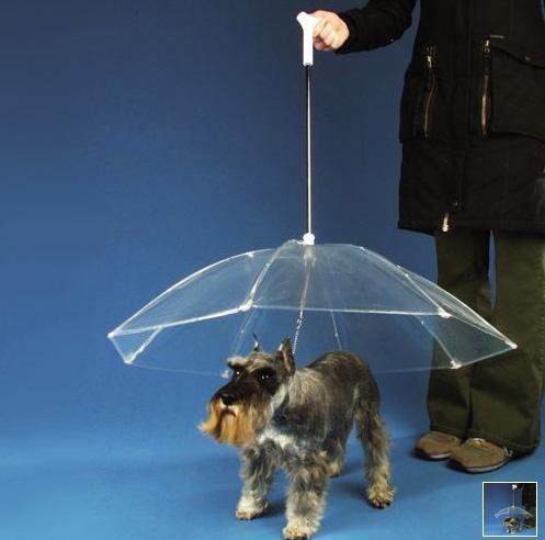 Dogbrella,This x That