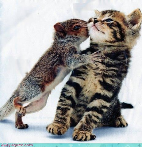 cat cooties disgusted do not want ewww friends friendship KISS kisses kissing kitten love shying away squirrel
