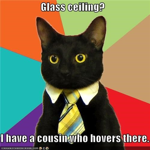 basement cat,Business Cat,ceiling cat,glass ceiling,tie