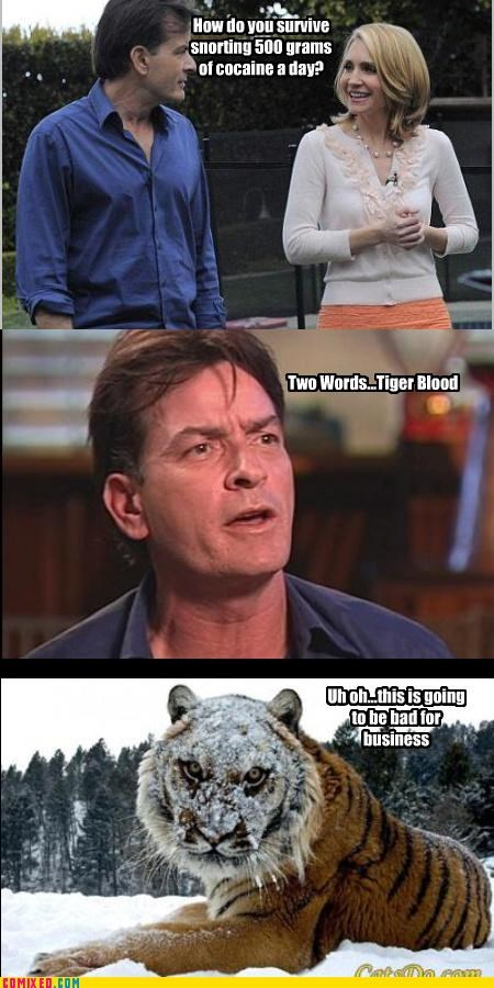 Charlie Sheen,drugs,tiger blood,white powder