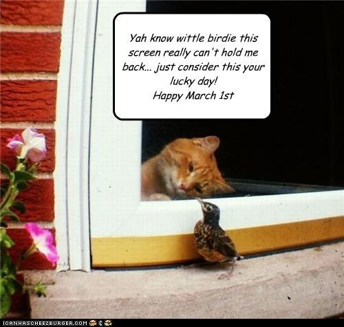 Yah know wittle birdie this screen really can't hold me back... just consider this your lucky day! Happy March 1st