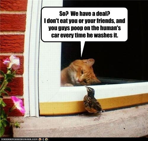 agreement,bird,caption,captioned,cat,deal,truce