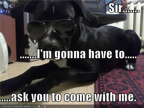 ask asking come come with me Command direction glasses order police puppy whatbreed - 4512210432