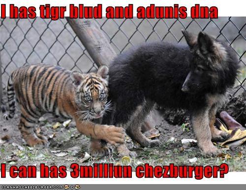 Cheezburger Image 4512244992