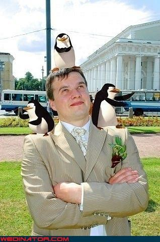 bad photoshop funny wedding photos groom madagascar penguins photoshop russia - 4512410624