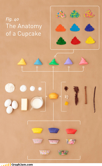 anatomy cupcakes delicious desserts DIY flow chart food infographic no percent science