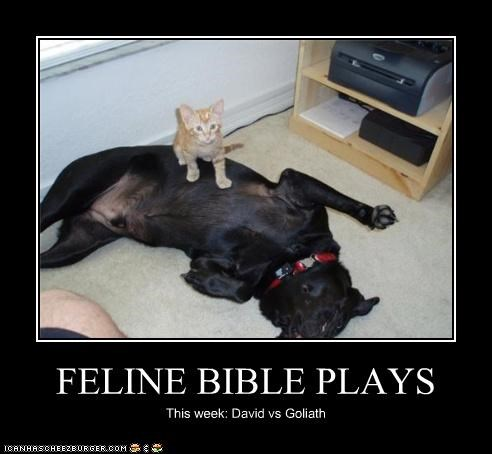 FELINE BIBLE PLAYS This week: David vs Goliath
