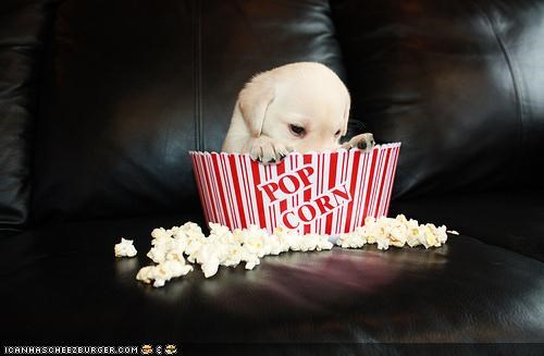 box container cyoot puppeh ob teh day do want eating favorite food labrador mess messy noms peeking Popcorn puppy