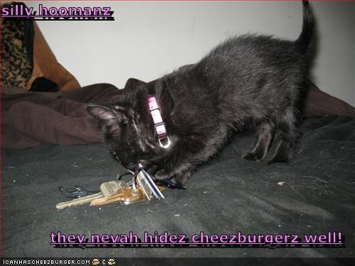 Cheezburger Image 4512964608