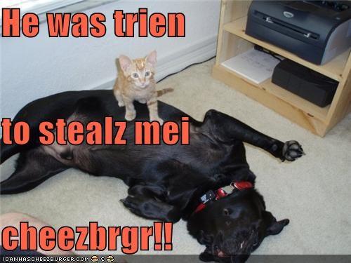 Cheezburger Image 4513030400