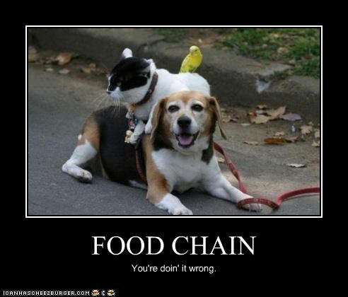 FOOD CHAIN You're doin' it wrong.