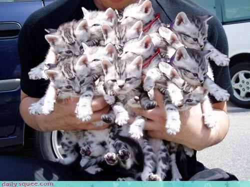 10 cat Cats cute grumpy handful holding kitten literalism literally litter sweet - 4513390848