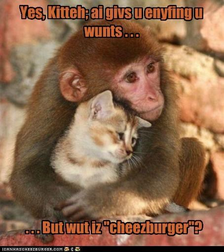 Cheezburger Image 4513842176