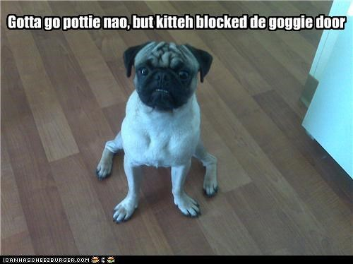 Gotta go pottie nao, but kitteh blocked de goggie door