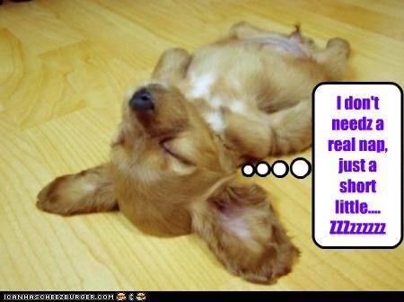 I don't needz a real nap, just a short little.... ZZZzzzzzz