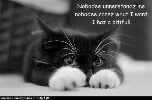 caption,captioned,cat,complaining,Hall of Fame,i has,kitten,nobody,pitiful,Sad,whining
