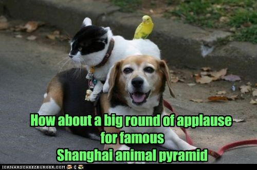 How about a big round of applause for famous Shanghai animal pyramid